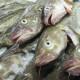 Il mercatino del pesce di Den Oever