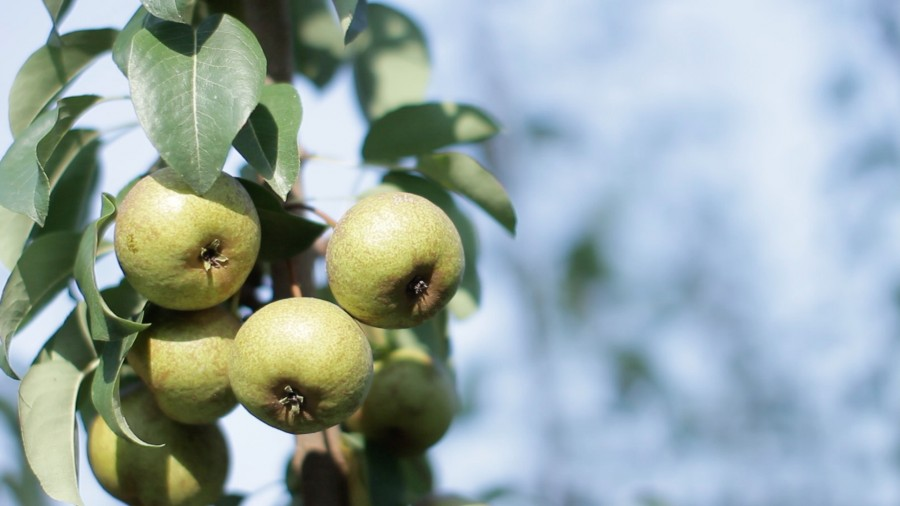 Fruttidimenticati5