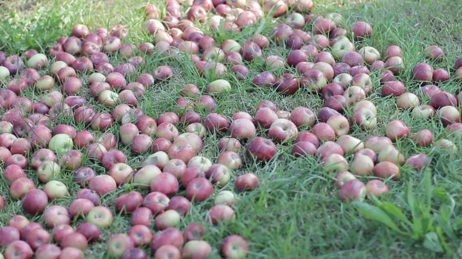 Fruttidimenticati6