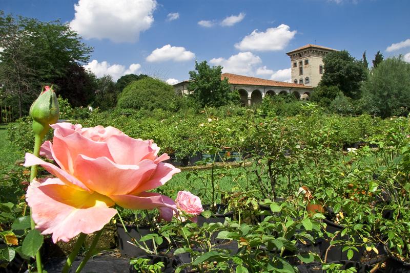 Palazzo Porcellaga, il giardino delle rose - dal sito www.giardinaggioIndor.it