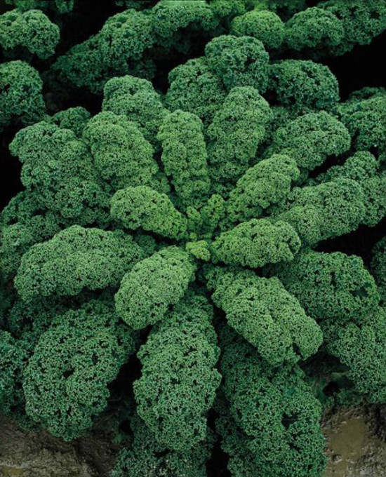Boerenkool 1 - pianta