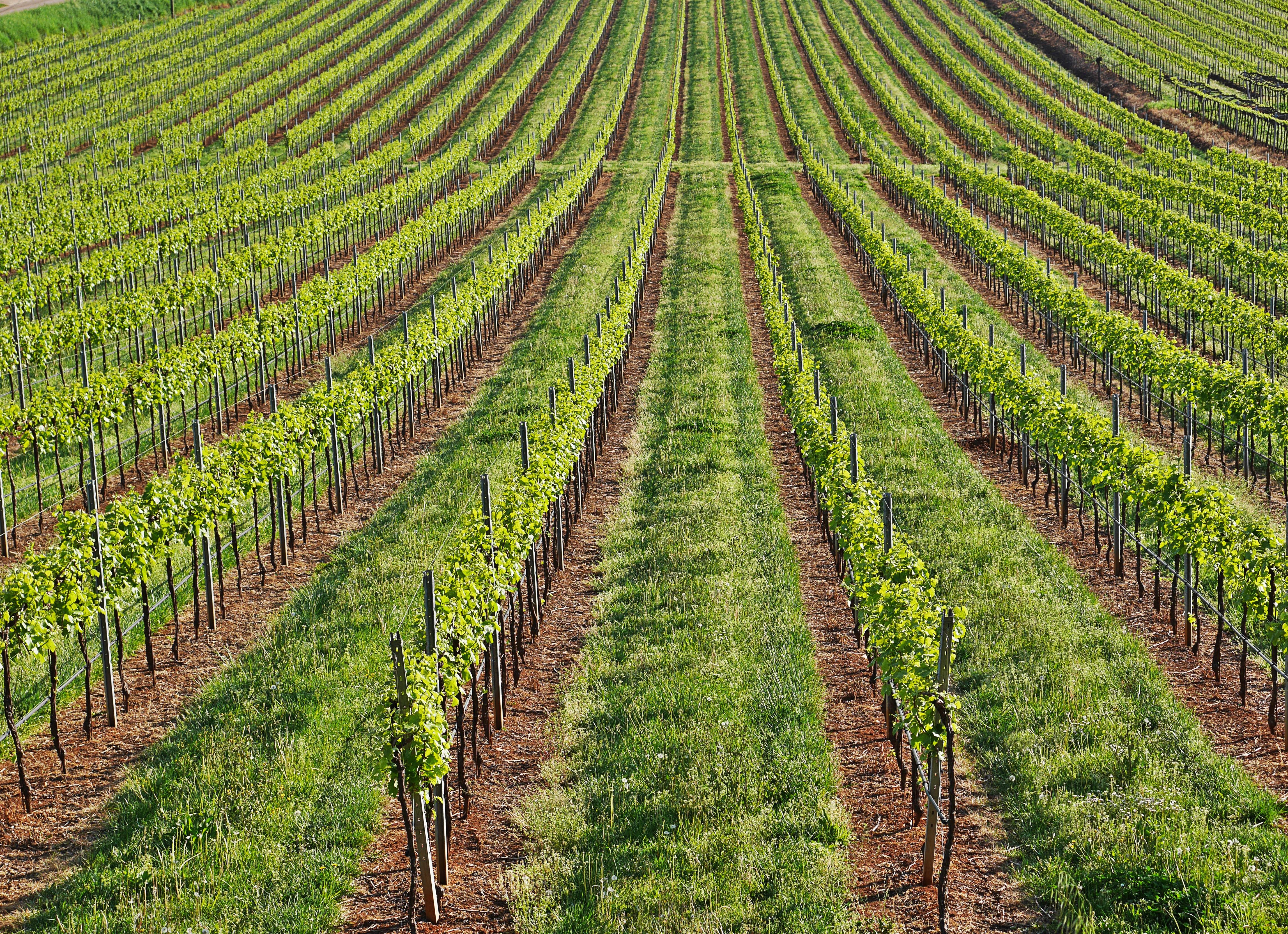 Il Vino Naturale questo sconosciuto: arriva il Disciplinare di Produzione del vino VinNatur