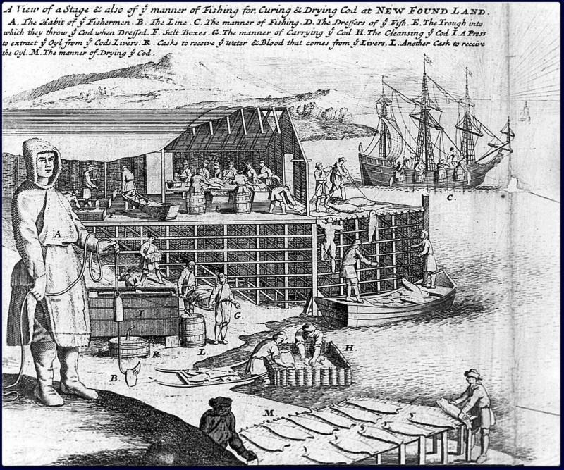 La salagione del merluzzo nel 1700 - dal sito history.stackexchange.com