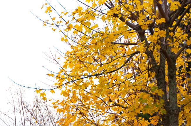 Castagne bosco-autunno