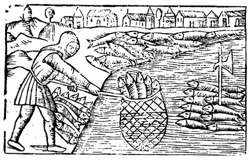La pesca delle aringhe dal libro di Olao Magno