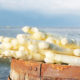 Una cura di ringiovanimento per gli asparagi bianchi olandesi