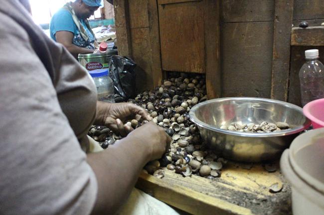 Le noci schiacchiate vengono selezionate una ad una dalle donne